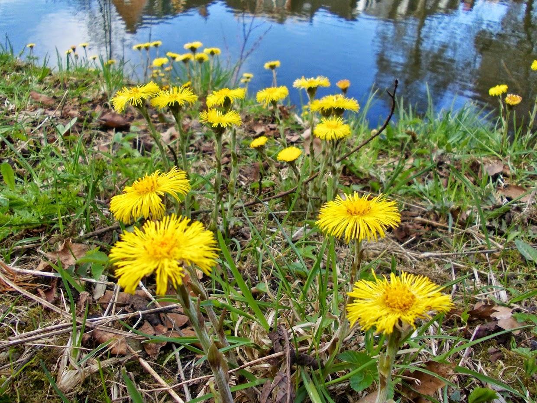 Rondleiding Noorderplantsoen-03-De_Korenbloem_Groningen