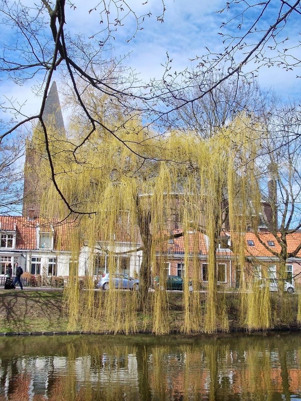 Rondleiding-Noorderplantsoen-07-De_Korenbloem_Groningen